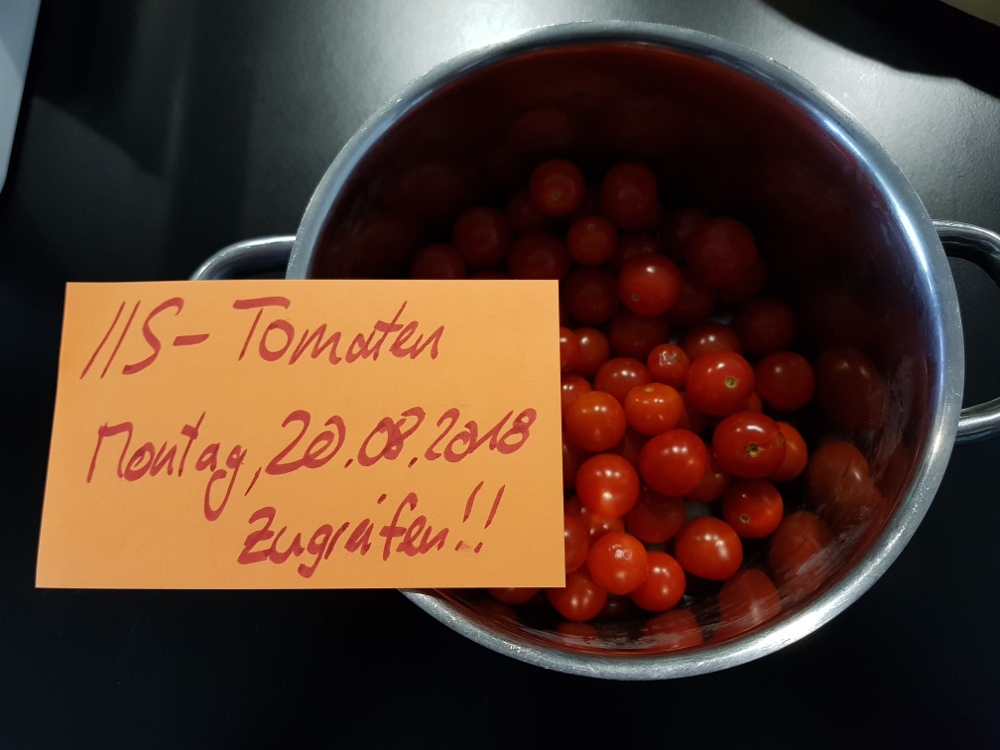 Tomatoes for snacking on, directly from our terrace!